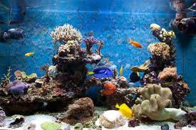 Acquistare un acquario: i prezzi online sono davvero più convenienti?