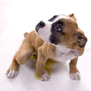 Prendere un cucciolo, si no forse