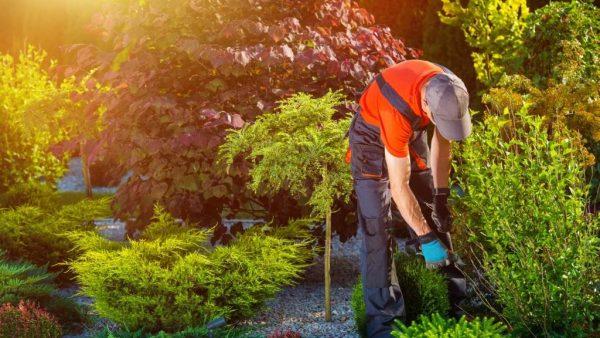 Come aprire un'attività di manutentore del verde